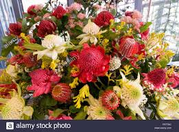native australian flowering plants assorted native australian flowers waratahs kangaroo paws and