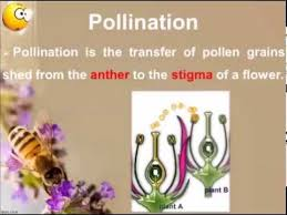 Reproduction In Flowering Plants - pollination sexual reproduction in flowering plants youtube