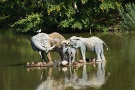 african safari animals free images water nature forest wilderness wildlife zoo
