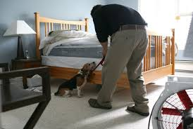 Do Bed Bugs Get On Dogs How To Get Rid Of Bedbugs Fast Best Way To Kill Bed Bugs