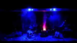 Led Blue Light Bulb by My Glofish Under Blue Led Lights Youtube