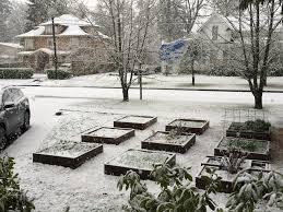 snow my garden in the grove