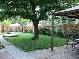 Tree Ideas For Backyard Backyard Tree Ideas Glassnyc Co