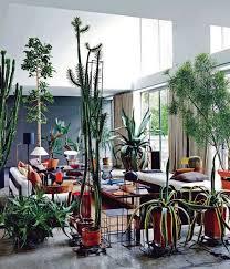 livingroom low maintenance indoor plants interior plants good