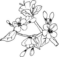 dibujo flores floreciendo en mayo colorear dibujos