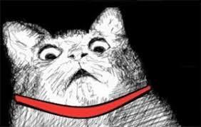 Gasp Meme - image yc surprised cat gasp jpg teh meme wiki fandom powered