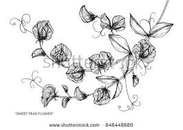 climbing plant stock images royalty free images u0026 vectors