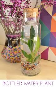 How To Take Care Of Flowers In A Vase Easy Water Terrariums Bottled Water Plants Dream A Little Bigger