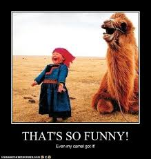 Camel Meme - animal capshunz camel funny animal pictures with captions