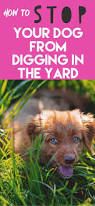 how to stop a dog from digging in the yard