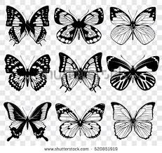 butterfly wings stock images royalty free images vectors