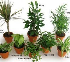 sweetlooking identify house plants common indoor in singapore