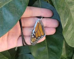 butterfly wing necklace images Real monarch butterfly wing necklace by caterpillararts jpg