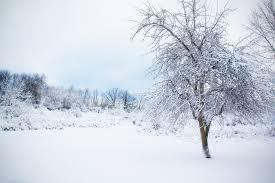 free photo snowy tree snow winter landscape free image on