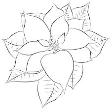 poinsettia coloring pages poinsettia clipart black and white free clip art images