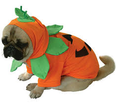 Halloween Pet Costume Pet Costumes Party Supplies China