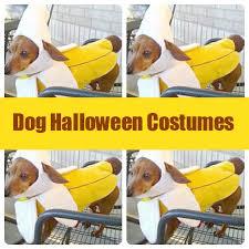 Weiner Dog Halloween Costumes Dog Halloween Costumes Sweet Spot Blog
