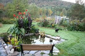 Mini Water Garden Ideas Small Water Garden Designs