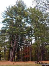 black rock state park watertown ct top tips u0026 info to know