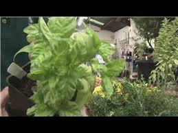 beginners vegetable gardening herb garden on the balcony youtube