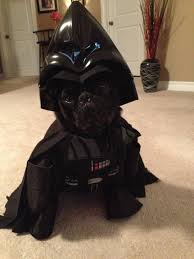 Halloween Darth Vader Costume 22 Star Wars Dog Costumes Rn