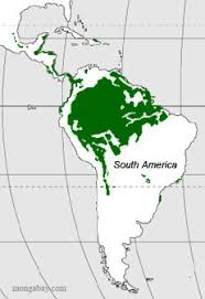 south america map rainforest location of rainforests