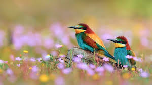 Flower And Bird - colorful birds flowers and colorful birds photos hd wallpapers