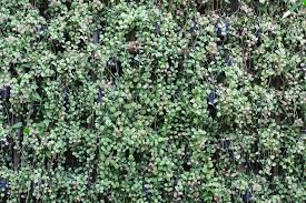 green ornamental plants hang on wall stock photo image 69792643