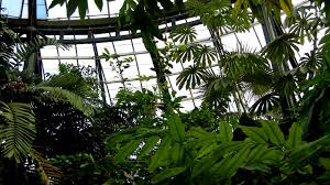 Huntington Botanical Gardens Pasadena by Conservatory Tropical Plant Room Pan Huntington Botanical