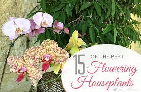 best house plants indoor house plants 15 of the best flowering houseplants