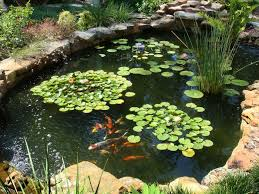 our favorite garden ponds from hgtv fans hgtv