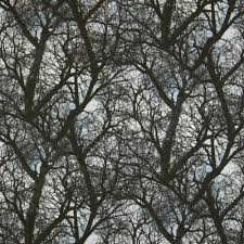 timeless treasures wicked dark tree branches black fabric