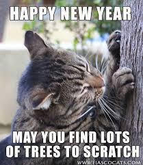 Happy New Year Cat Meme - happy new year fury friends fiasco cats