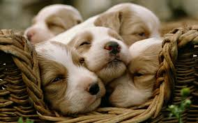 Wallpaper Dog Download Wallpaper 3840x2400 Dogs Puppies Sleeping Basket Ultra