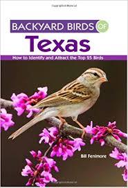 Backyard Birds Utah Backyard Birds Of Texas How To Identify And Attract The Top 25