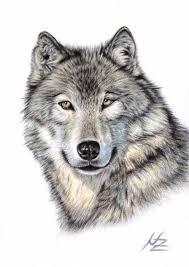 imagenes sorprendentes de lobos wolf head drawing looks amazing as a tattoo art pinterest