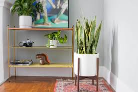 Plant Delivery The Large Snake Plant Free Plant Delivery In The San Francisco