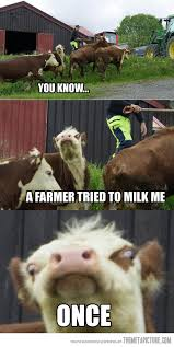 Funny Cow Memes - you know hilarious humor and animal