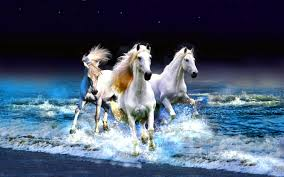 1232 horse hd wallpapers backgrounds wallpaper abyss