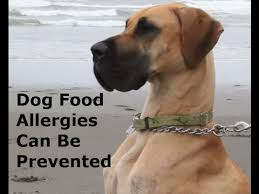dog food allergies and how you can stop them youtube