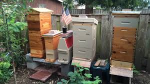 how to relocate a hive in a small urban back yard beekeeping
