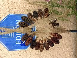 wreath seed pod fall magnolia my wreath u0026 craft works