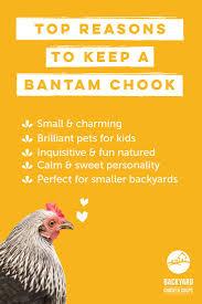 21 best sebright chickens images on pinterest hens backyards