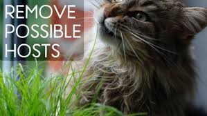 Can Bed Bugs Live On Cats Are You Being Eaten By Invisible Bugs Dengarden