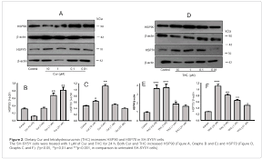 curcumin modulates molecular chaperones and autophagy lysosomal