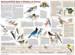 backyard birds open a window on science through 25 years of