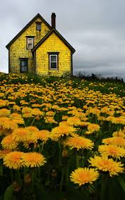 Homes For Sale In Nova Scotia Abandoned House In Nova Scotia Yellow Houses Nova Scotia And
