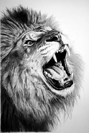 best 25 animal pencil drawings ideas on pinterest 3d pencil
