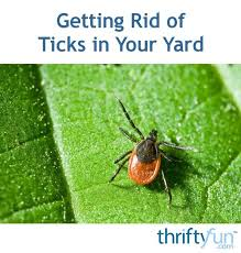 Ticks In Backyard 16 Best Get Rid Of Snakes Images On Pinterest Pest Control