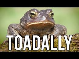 Animal Pun Meme - 15 unbearable animal puns is toadally hilarious my grandpa was a